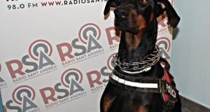 Policia Local -Unitat Canina  Gos Duc