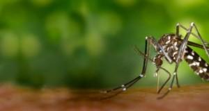 mosquit_0_0