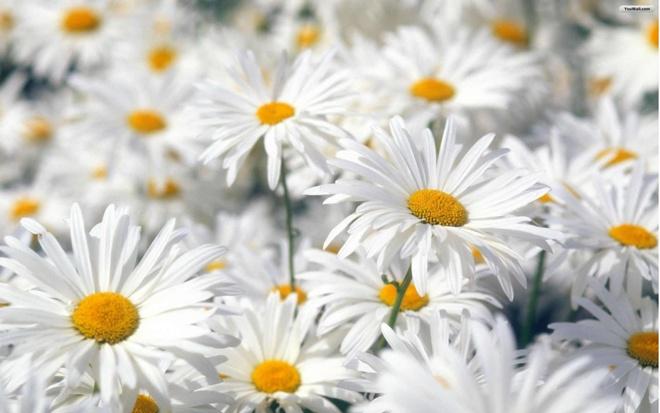 Resultado de imagen de primavera flors