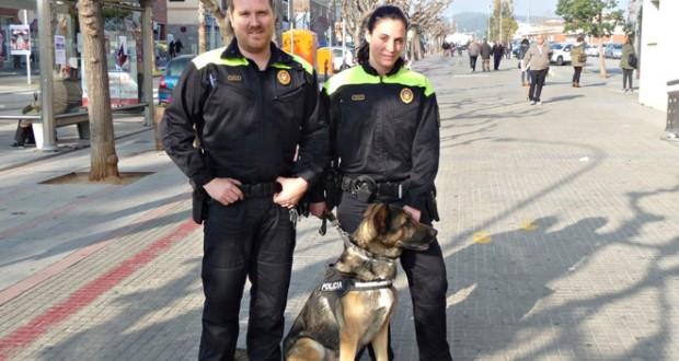 T'expliquem com treballa la unitat canina de la policia local de Sant Andreu de la Barca
