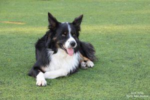 Jornades Unitats Canines Sant Andreu Barca -03