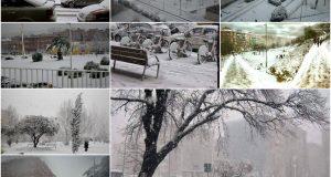 Collage nevada 2010