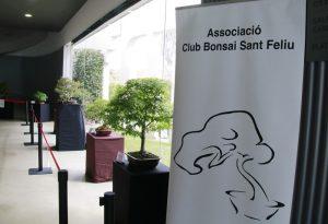 Exposició bonsais Teatre Núria Espert 00
