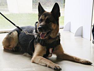 L'agent canina Kènia ES JUBILA 01