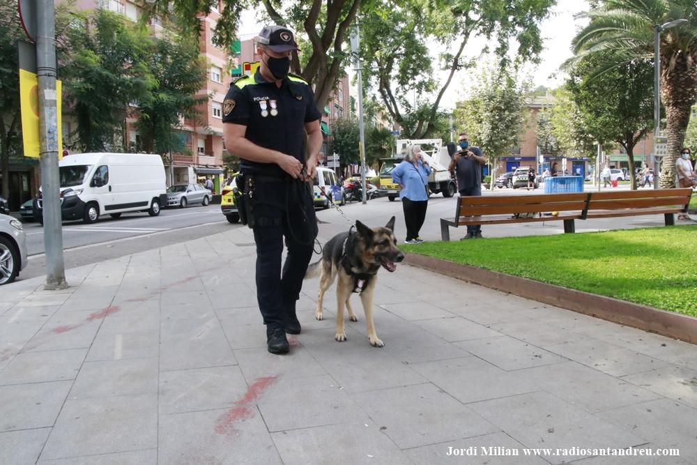 L'agent canina Kènia ES JUBILA 04